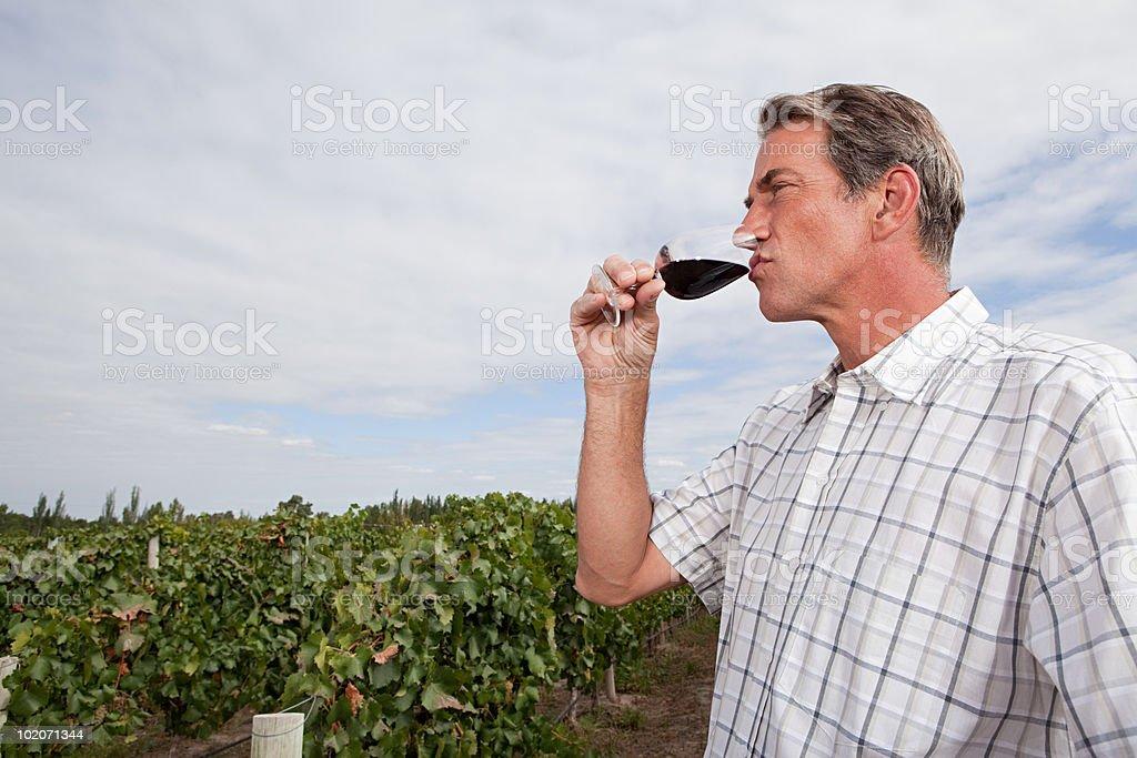 Mature man drinking red wine in vineyard royalty-free stock photo