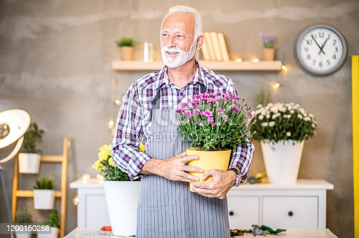 Portrait of mature man florist with grey hair holding pot with flowers in beautiful living room.