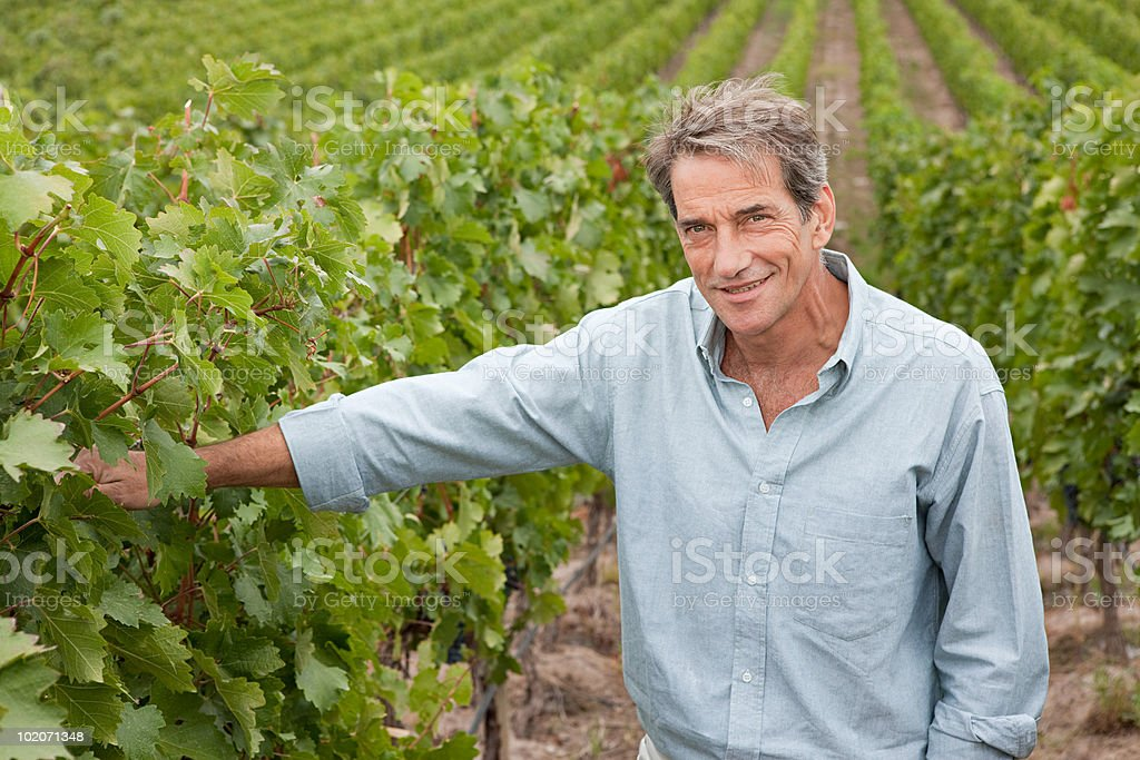 Mature man in a vineyard royalty-free stock photo