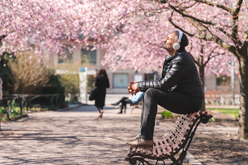 A mature man is sitting on a park bench in a public park. He is enjoying the sun and listening to music, surrounded by blooming cherry blossom.