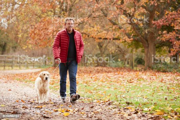 Mature man on autumn walk with labrador picture id805086234?b=1&k=6&m=805086234&s=612x612&h=dppki7lmg9oytn2pyqg3ja4s3tijjw3qydre4nxdwgq=