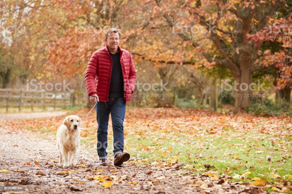 Mature Man On Autumn Walk With Labrador stock photo