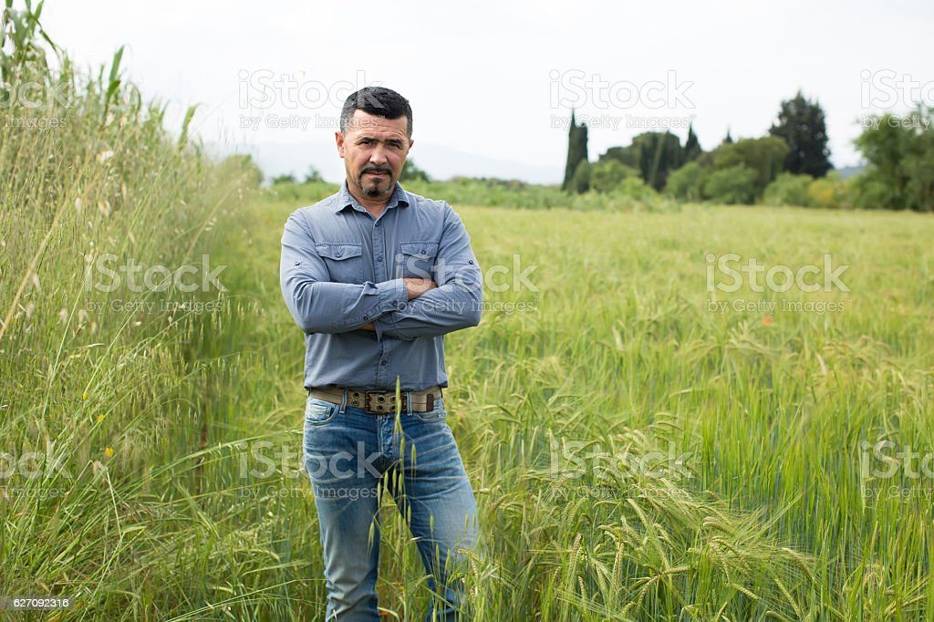Mature man standing in green wheat field stock photo