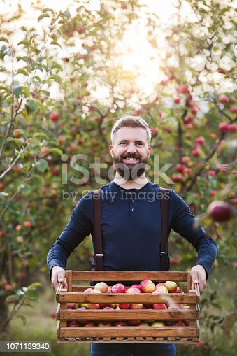 istock A mature man standing in orchard in autumn, holding a box full of apples. 1071139340