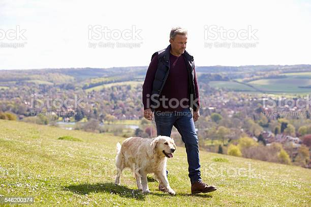 Mature man taking golden retriever for walk in countryside picture id546200374?b=1&k=6&m=546200374&s=612x612&h=edopjlj4jjn8jbnpwa1xdcxpbhewv5krzvozyaf3zia=