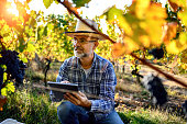 Man using digital tablet in vineyard
