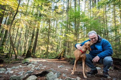 Mature Man, Vizsla Dog Enjoying Time Together in Sunlit Forest