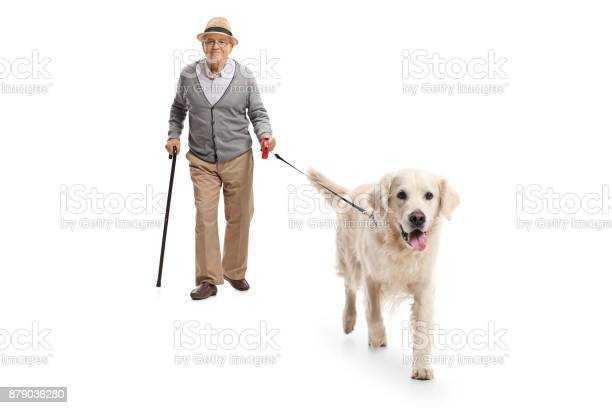 Mature man walking a dog picture id879036280?b=1&k=6&m=879036280&s=612x612&h=ecyprt0caurmryptixifxiwmu7zrhn8iyrwthriqouy=