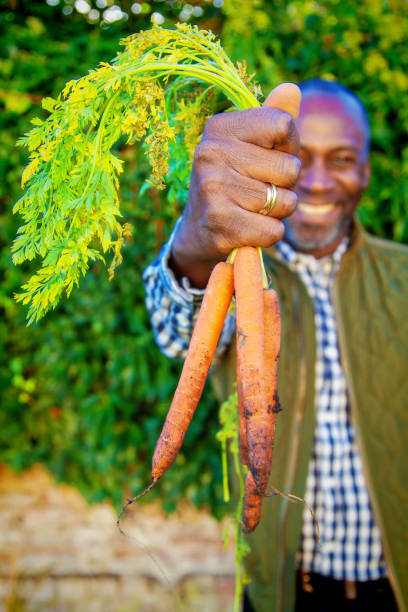 Rijpe mens met organische wortelen foto