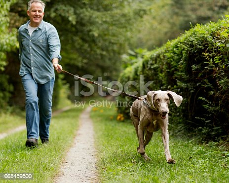 Mature man walking in park with his pet Labrador Retriever. Square shot.