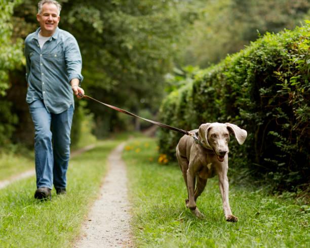 Mature man with pet dog at park picture id668459500?b=1&k=6&m=668459500&s=612x612&w=0&h=corlribtjplifrsaezkjoxbqhb7pkpysr yoasjdvpe=