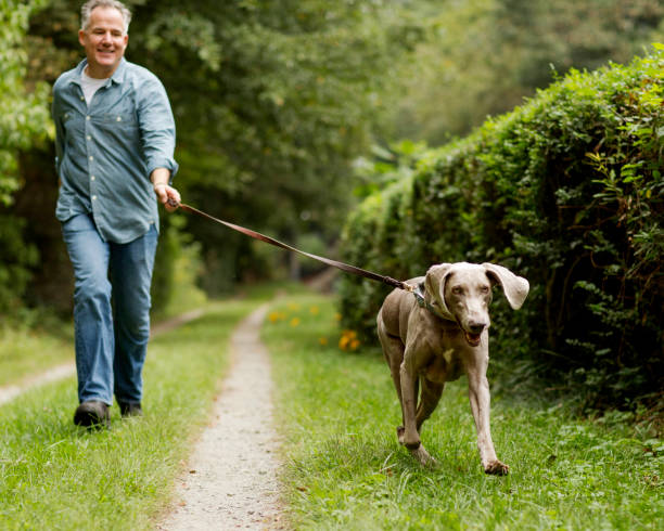 Mature Man With Pet Dog At Park. stock photo