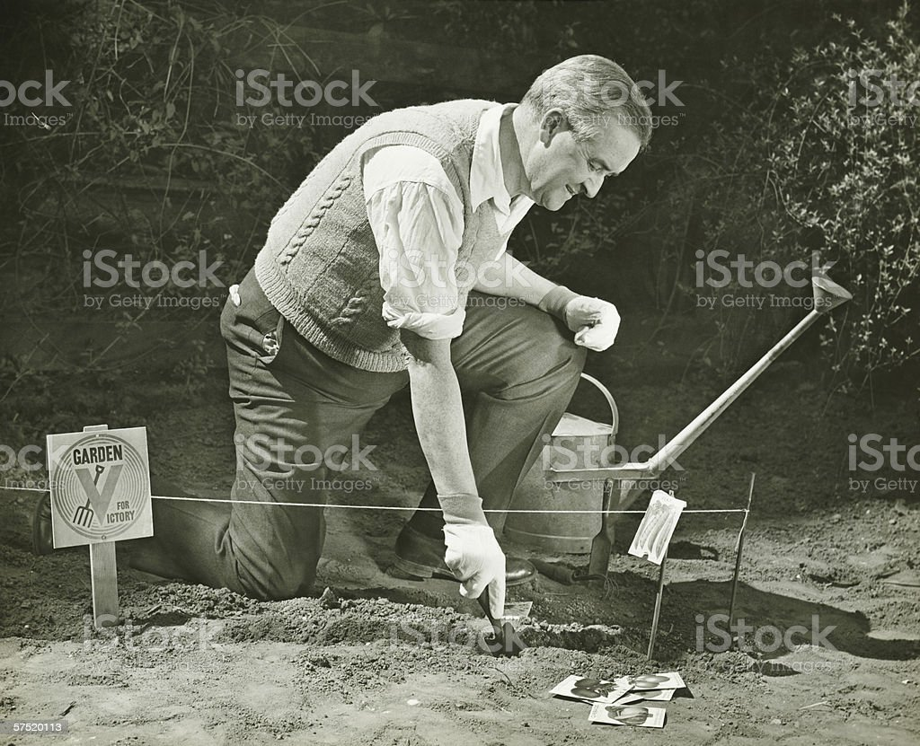 Mature man working on World War II Victory Garden, (B&W) royalty-free stock photo
