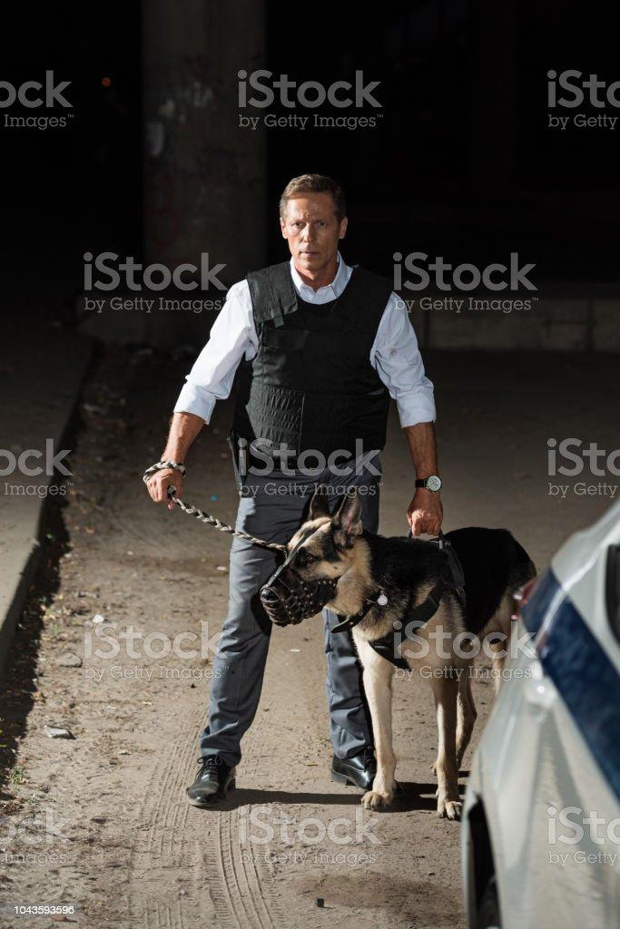 mature policeman in bulletproof vest holding german shepherd dog on leash near car at city street stock photo