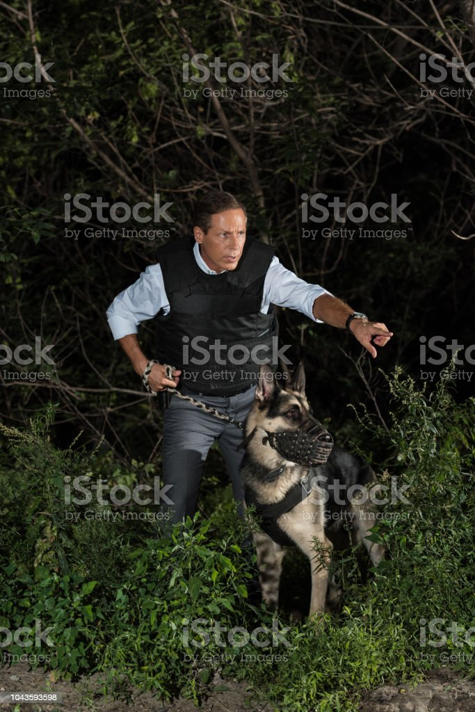 mature policeman in bulletproof vest pointing by finger to german shepherd dog near forest stock photo