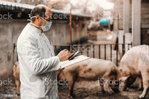 Mature veterinarian in white coat and protective mask on face holding picture id1137864715?b=1&k=6&m=1137864715&s=612x612&h=3kj5dzksy4zihxpb60fx1vffftf4gypnx5yqhyqgd98=