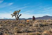 Joshua Trees growing in California's Great Basin Desert