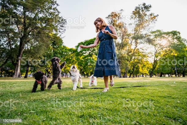 Mature woman and her dogs in park picture id1207034695?b=1&k=6&m=1207034695&s=612x612&h=a1qs0qtjjxv0dyrdsrjgnev7pyab jv20rsmplpupzu=