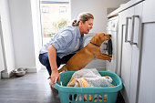 A mature caucasian woman crouched down doing her laundry in the kitchen while her fox red Labrador Retriever is trying to climb into the washing machine.
