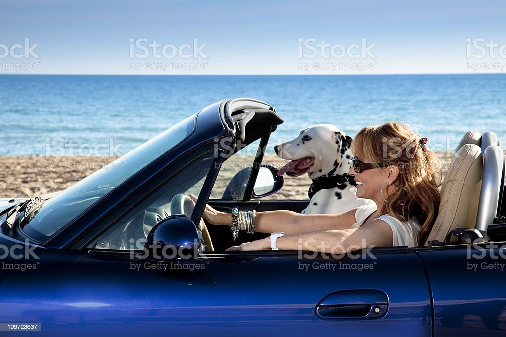 Mature woman driving an sports car with her dog stock photo