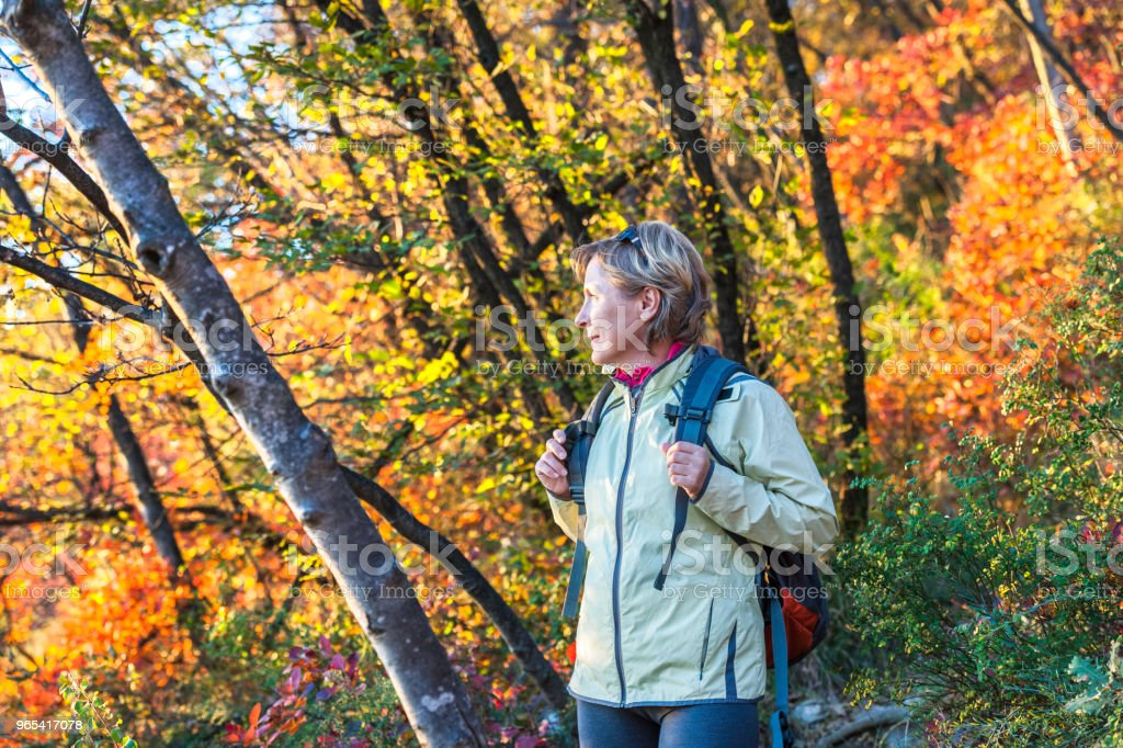 Mature woman enjoys autumn colors,Italy ,Europe zbiór zdjęć royalty-free