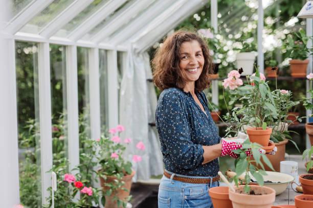 reife frau wachsende einheimische lebensmittel in ihrem gewächshaus pflanzen - italienischer abstammung stock-fotos und bilder