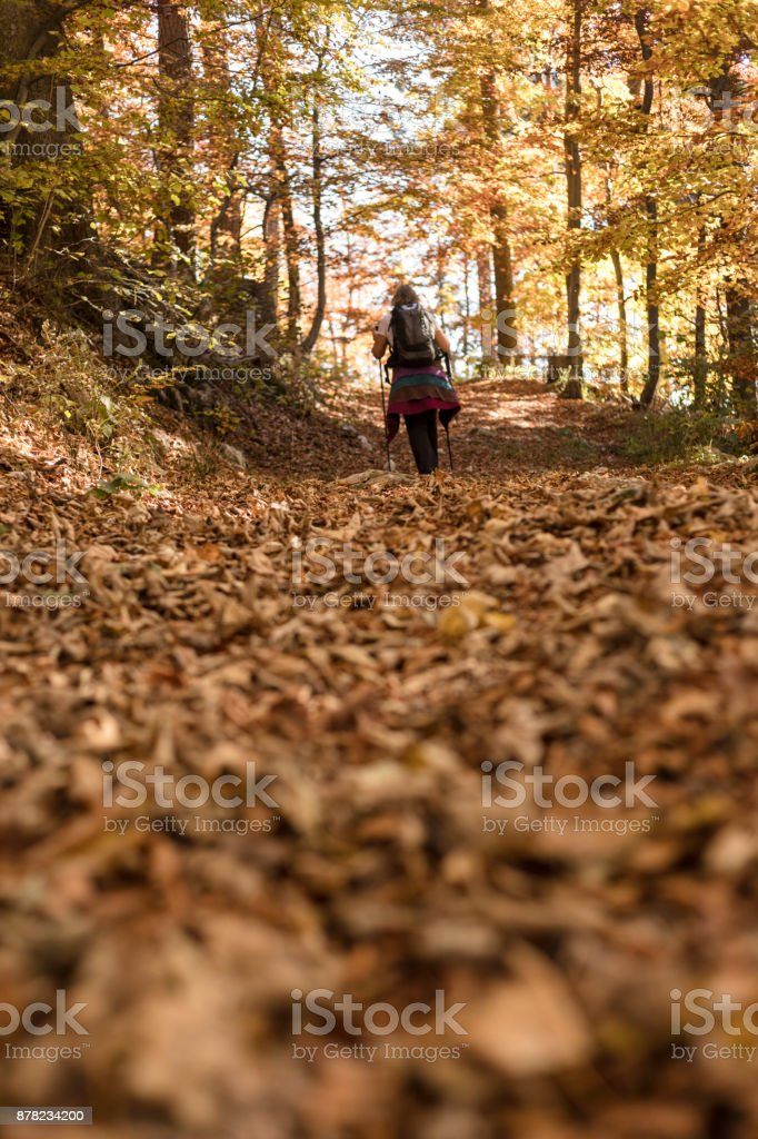 Mature Woman Hiking in Forest stock photo