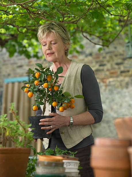 Mature woman in garden holding potted fruit tree stock photo