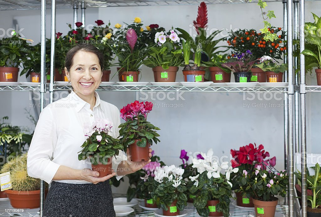 mature woman looks Cyclamen  at flower store royalty-free stock photo