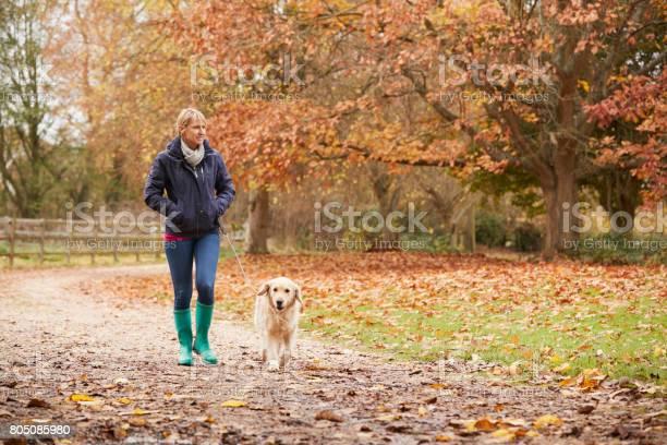 Mature woman on autumn walk with labrador picture id805085980?b=1&k=6&m=805085980&s=612x612&h=1ccrmggxj53nyakmlp785qerzfdp xgj8aocggbx8do=