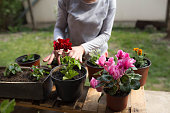 mature woman setting up and arranging flowers at her backyard