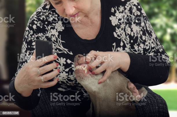 Mature woman shoots dogs teeth for televeterinary picture id685882098?b=1&k=6&m=685882098&s=612x612&h=newq91e6 hxrer9h5dvy coorzbmczcdyaak4geyzpk=