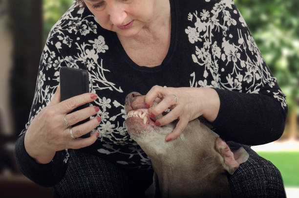 Mature woman shoots dogs teeth for televeterinary picture id685882098?b=1&k=6&m=685882098&s=612x612&w=0&h=tnjppih2cqvneq0g3ljliqmp1fcoajymmn gdo0z78w=