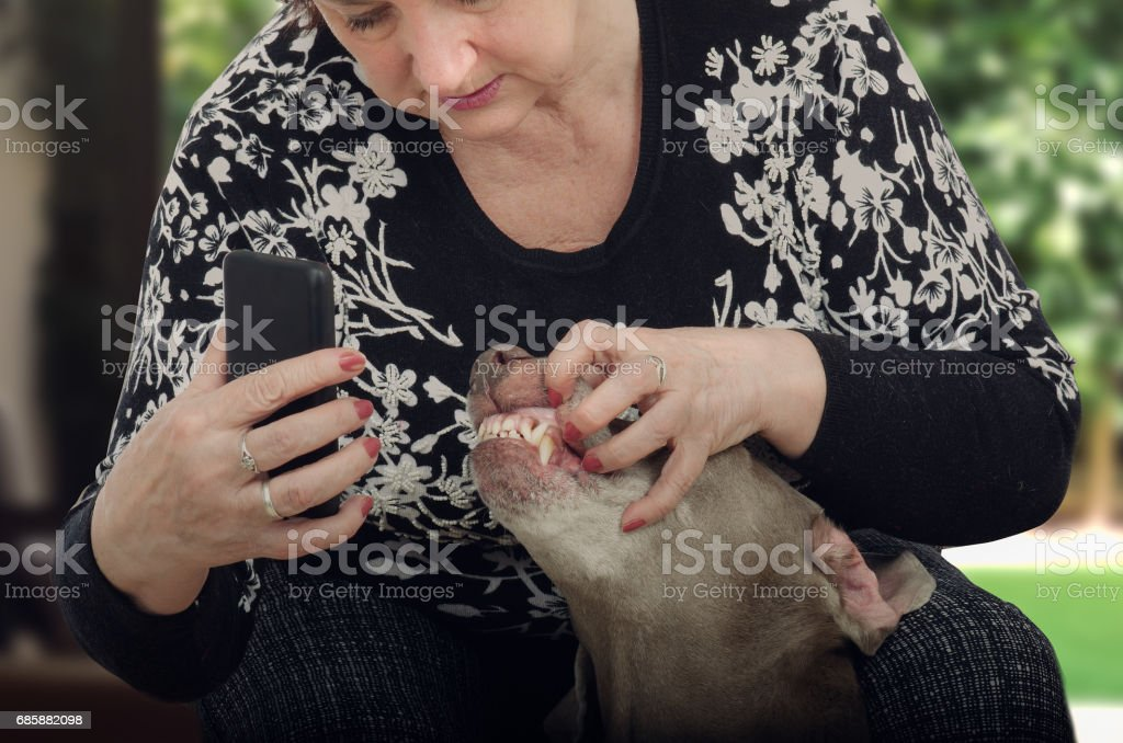 Mature woman shoots dogs teeth for televeterinary stock photo