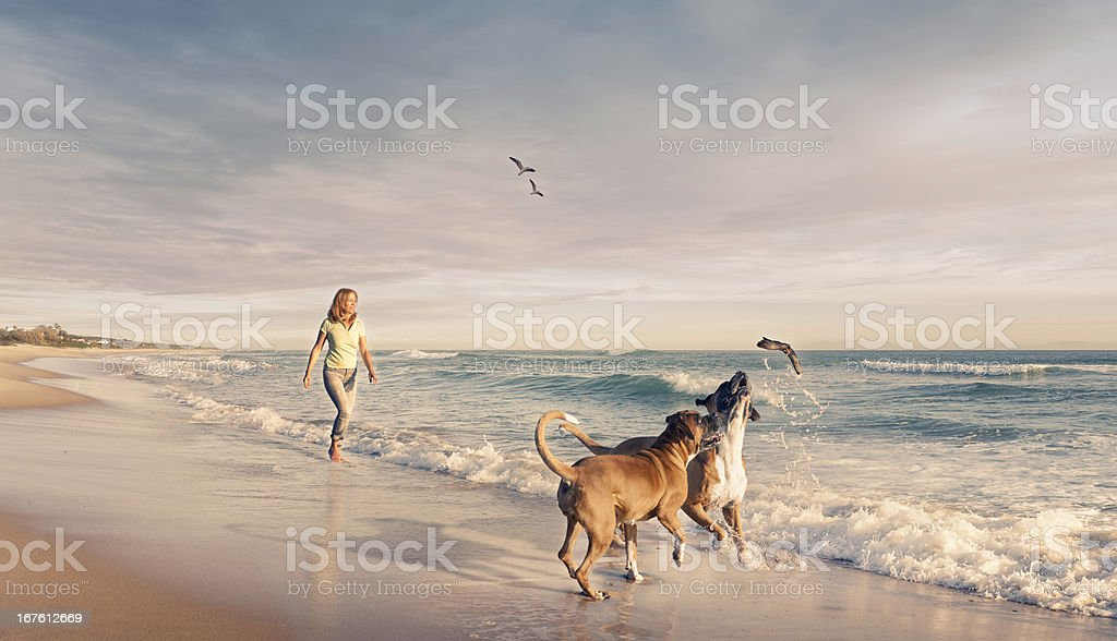 Mature woman walking two dogs seaside sunset
