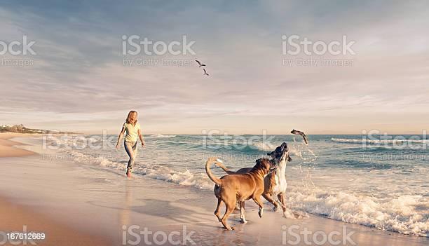 Mature woman walking two dogs seaside sunset picture id167612669?b=1&k=6&m=167612669&s=612x612&h=ugav0kgdb6wv36gflrqhjjkk1wteekkvbup eq3samw=