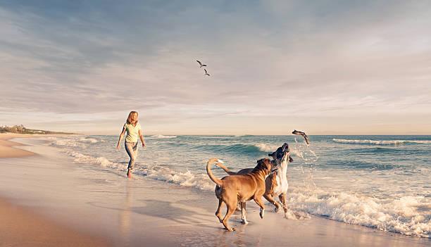 Mature woman walking two dogs seaside sunset stock photo