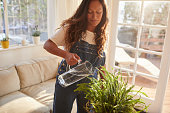 istock Mature woman watering hanging plants in her lounge 1195057290