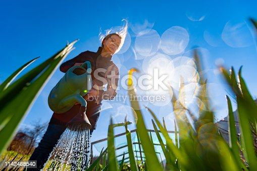 Mature Woman Watering Welsh Onion.