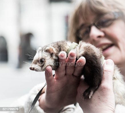 mature woman with ferret