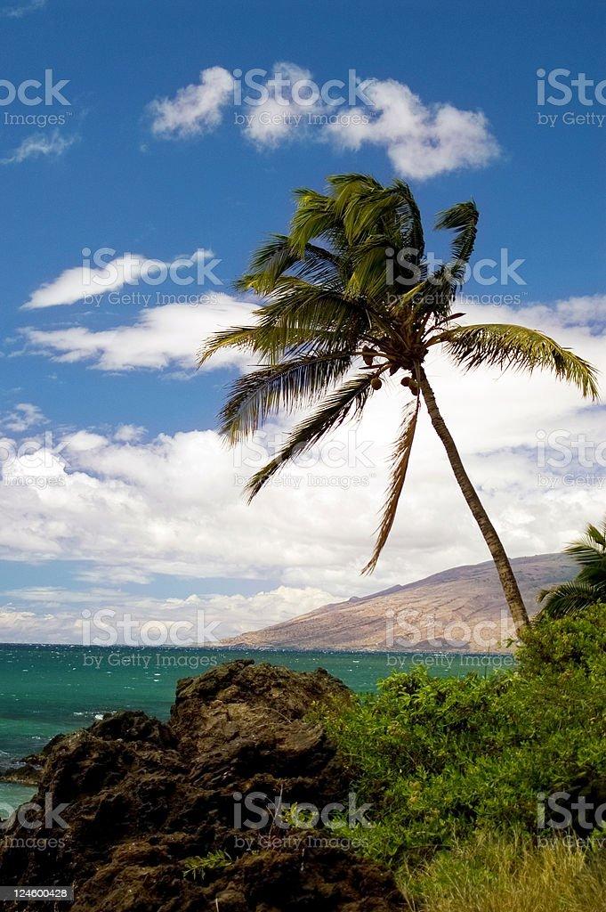 Maui Coast stock photo