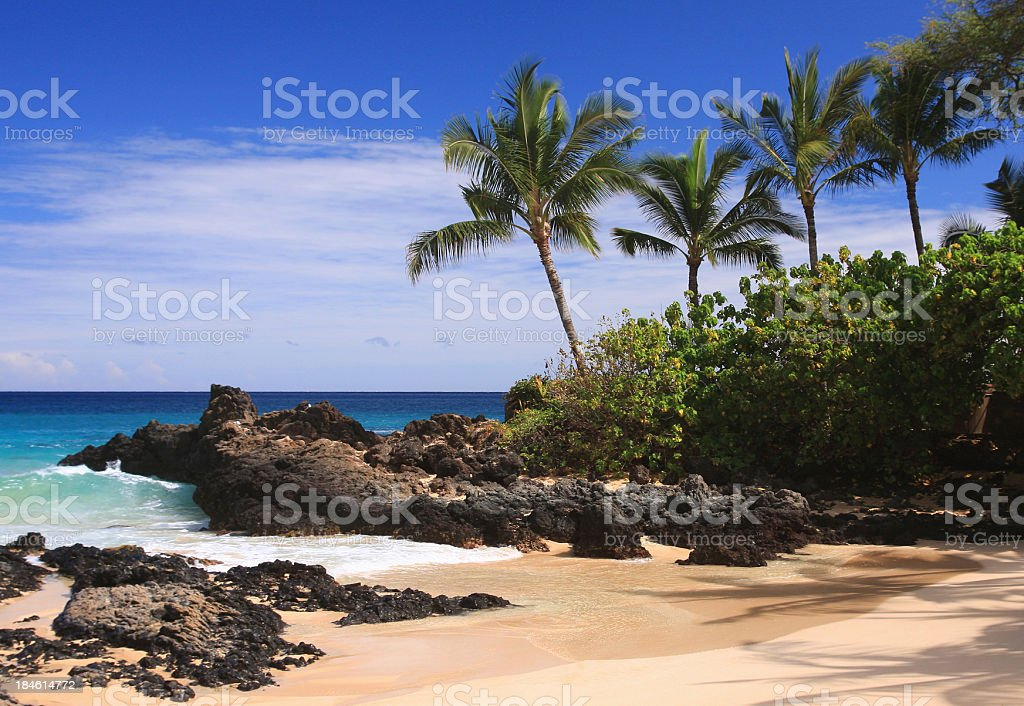 Maui Hawaii Pacific ocean palm tree beach scene stock photo