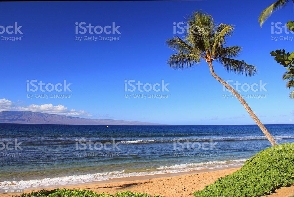 Maui Hawaii Pacific ocean, palm tree scenic royalty-free stock photo