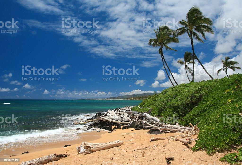 Maui Hawaii palm tree beach Pacific ocean scenic stock photo