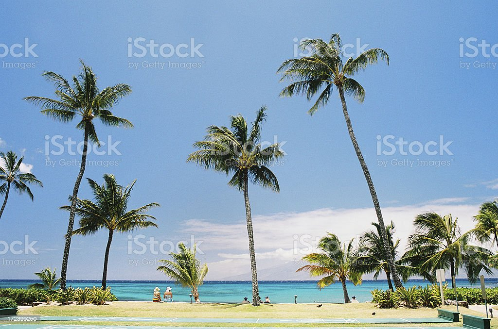 Maui Hawaii  palm tree ocean hotel scenic royalty-free stock photo