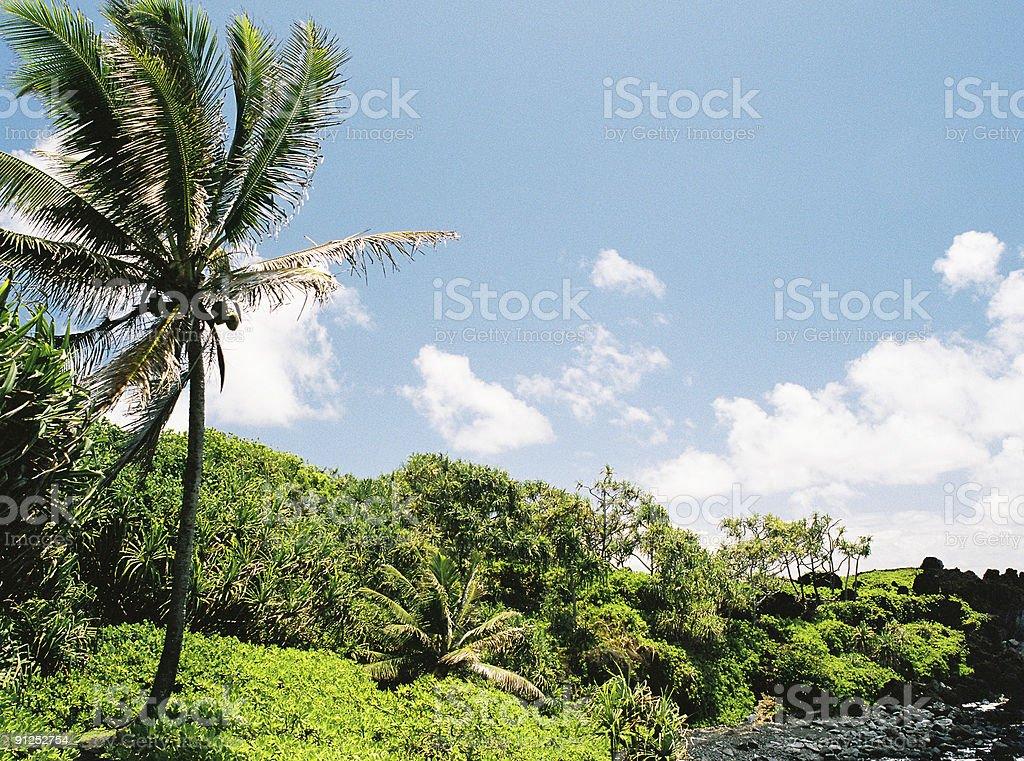 Maui, Hawaii palm tree scenic royalty-free stock photo