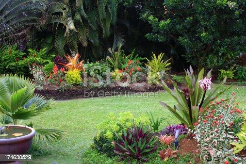 A backyard garden on Hawaii