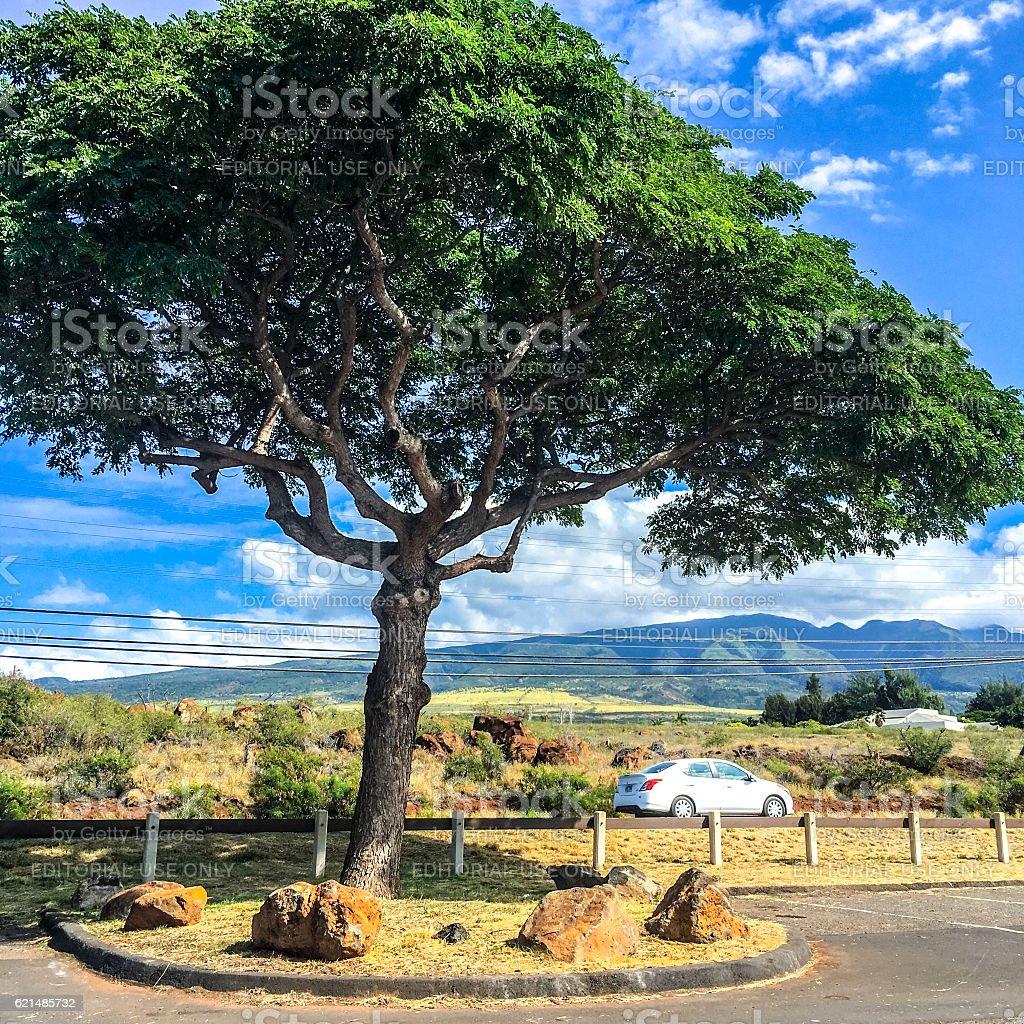 Maui landscape, Hawaii, USA photo libre de droits
