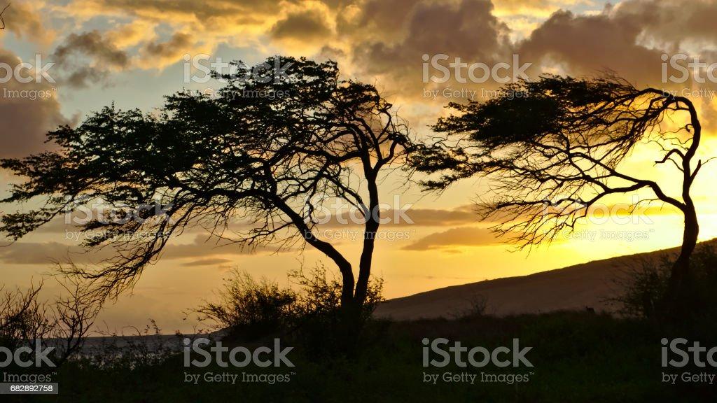 Maui palm trees in the sunset Lizenzfreies stock-foto