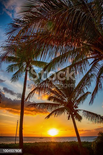 Beautiful sunset beyond the palm trees on the tropical Hawaiian island of Maui.